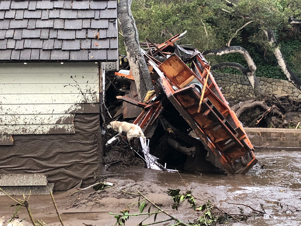 <div class='meta'><div class='origin-logo' data-origin='none'></div><span class='caption-text' data-credit='EliasonMike/Twitter'>&#34;Santa Barbara County Fire Search Dog Reilly looks for victims in damaged and destroyed homes in Montecito following deadly runoff of mud and debris from heavy rain overnight.&#34;</span></div>