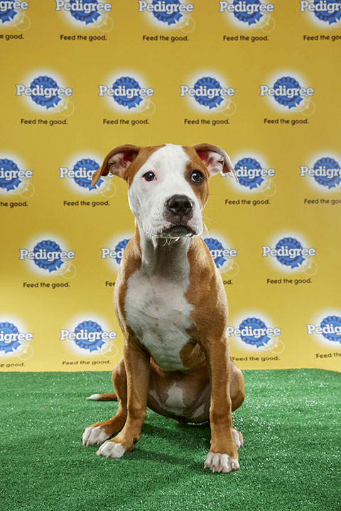 "<div class=""meta image-caption""><div class=""origin-logo origin-image none""><span>none</span></div><span class=""caption-text"">Daphne, for Team Ruff, is a 19-week-old pit bull. She's from Tennessee. (Animal Planet)</span></div>"