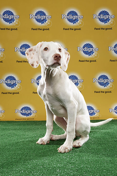 "<div class=""meta image-caption""><div class=""origin-logo origin-image none""><span>none</span></div><span class=""caption-text"">Doobert, for Team Ruff, is 15-week-old English Pointer. He's from Virginia. (Animal Planet)</span></div>"