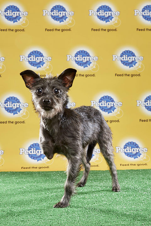 "<div class=""meta image-caption""><div class=""origin-logo origin-image none""><span>none</span></div><span class=""caption-text"">Lucky, for Team Fluff, is a 16-week-old terrier mix. She's from Tennessee. (Animal Planet)</span></div>"