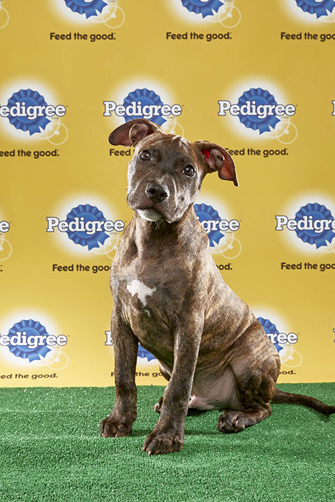 "<div class=""meta image-caption""><div class=""origin-logo origin-image none""><span>none</span></div><span class=""caption-text"">Max, for Team Fluff, is a 13-week-old pit bull mix. He's from Pennsylvania. (Animal Planet)</span></div>"