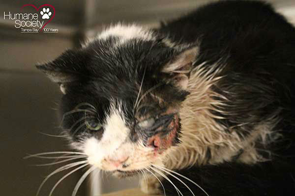 <div class='meta'><div class='origin-logo' data-origin='none'></div><span class='caption-text' data-credit='Photo/Humane Society of Tampa Bay'>A young cat in Florida was buried alive by its owner, who thought he was dead after getting hit by a car. But Bart proved everyone wrong by climbing from his own grave.</span></div>