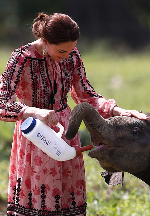 "<div class=""meta image-caption""><div class=""origin-logo origin-image ap""><span>AP</span></div><span class=""caption-text"">Kate feeds a baby elephant at the Centre for Wildlife Rehabilitation and Conservation in northeastern Assam state, India, Wednesday, April 13, 2016. (Adnan Abidi/ Pool photo via AP)</span></div>"