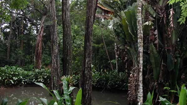 "<div class=""meta image-caption""><div class=""origin-logo origin-image ""><span></span></div><span class=""caption-text"">The Tijuca Forest: This 12.4-square-mile rainforest, claiming to be the largest urban forest, is home to hundreds of species of plants and wildlife, many threatened by extinction. (saakewiik/Flickr)</span></div>"