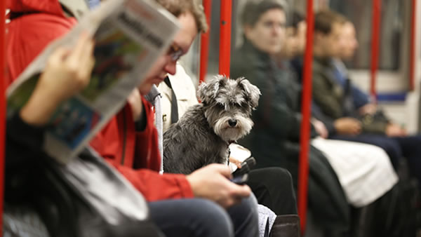 June 20- Take Your Dog to Work Day:  Your dog probably sits at home all day and wonders what you are doing. Today is the day he discovers what that is. <span class=meta>(AP Photo&#47;Lefteris Pitarakis)</span>