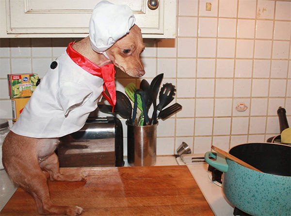 Nubbles preparing fillet mignon, served with kitty Roca. <span class=meta>NubblesTheWonderDog / Facebook</span>