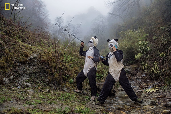 "<div class=""meta image-caption""><div class=""origin-logo origin-image wabc""><span>wabc</span></div><span class=""caption-text"">In a large forested enclosure of the Wolong Reserve, panda keepers Ma Li and Liu Xiaoqiang listen for radio signals from a collared panda training to be released to the wild. (© Ami Vitale / National Geographic)</span></div>"