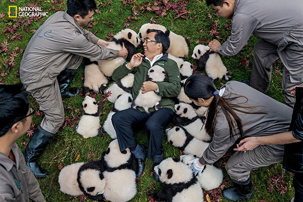 "<div class=""meta image-caption""><div class=""origin-logo origin-image wabc""><span>wabc</span></div><span class=""caption-text"">Zhang Hemin-""Papa Panda"" to his staff-poses with cubs born in 2015 at Bifengxia Panda Base.  (© Ami Vitale / National Geographic)</span></div>"