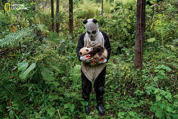 "<div class=""meta image-caption""><div class=""origin-logo origin-image wabc""><span>wabc</span></div><span class=""caption-text"">Caretakers for the pandas have to wear costumes scented with panda urine so the animals won't get used to humans. (© Ami Vitale / National Geographic)</span></div>"