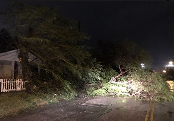 <div class='meta'><div class='origin-logo' data-origin='none'></div><span class='caption-text' data-credit='Justin Horne from ABC affiliate KSAT'>Trees block a road in Corpus Christ, Texas</span></div>