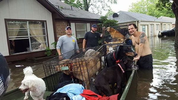 <div class='meta'><div class='origin-logo' data-origin='none'></div><span class='caption-text' data-credit='William Beasley'>Rescue workers discovered southeast Houston resident Betty Walter sheltering 21 neighborhood dogs. Walter and the dogs were all rescued.</span></div>