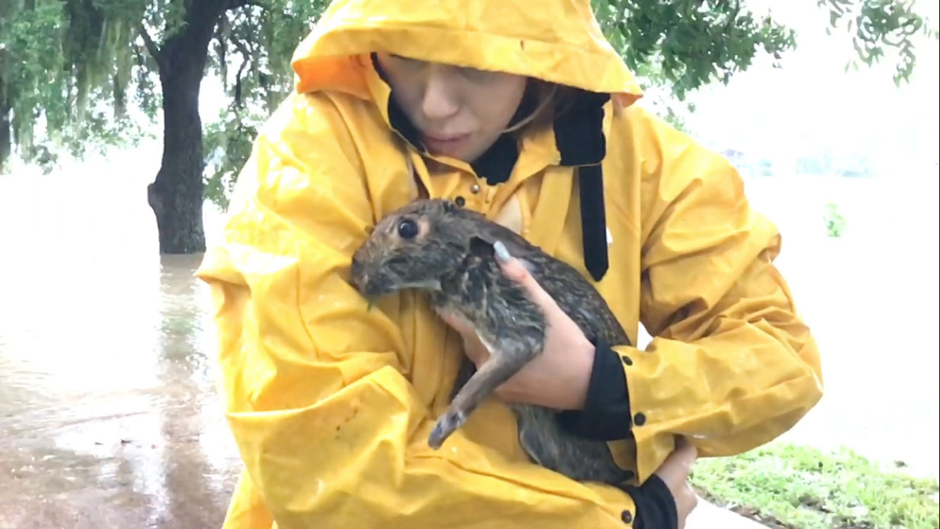 <div class='meta'><div class='origin-logo' data-origin='none'></div><span class='caption-text' data-credit='Sheryl Maiden'>A viewer sent in these photos of the rescue of a bunny found struggling in the water. They said after several hours of caring for it, the bunny was able to hop away.</span></div>
