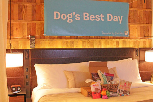 <div class='meta'><div class='origin-logo' data-origin='none'></div><span class='caption-text' data-credit='Photo/BarkPost'>She stayed in the dog-friendly 1 Hotel Central Park, where she was presented with a basket of treats and toys.</span></div>