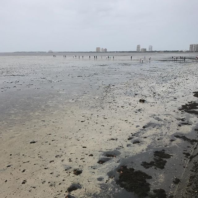 <div class='meta'><div class='origin-logo' data-origin='none'></div><span class='caption-text' data-credit='Steven Hernandez'>People walk on the dry bay in Tampa on Sunday. Strong winds from Irma caused the waters to recede while the eye was still hours from reaching Tampa.</span></div>