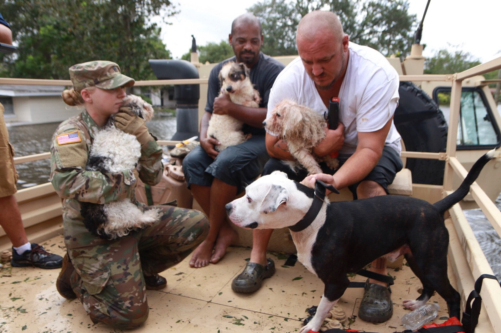 <div class='meta'><div class='origin-logo' data-origin='none'></div><span class='caption-text' data-credit='OCFireRescue/Twitter'>The National Guard, along with Orange County Fire and Rescue, were out rescuing pets in the storm.</span></div>