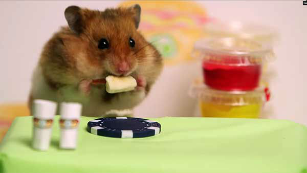 "<div class=""meta image-caption""><div class=""origin-logo origin-image ""><span></span></div><span class=""caption-text"">But Tiny Hamster doesn't let up, and the victor is clear. (Photo/YouTube, HelloDenizen)</span></div>"