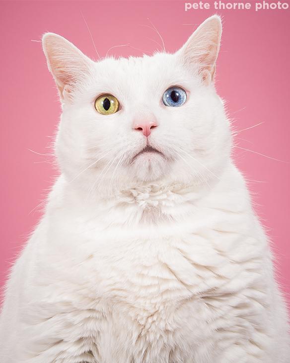 <div class='meta'><div class='origin-logo' data-origin='Creative Content'></div><span class='caption-text' data-credit='pete thorne photo'>Evie.</span></div>