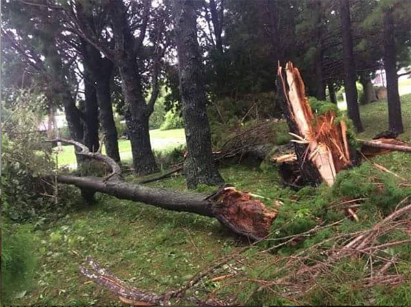 <div class='meta'><div class='origin-logo' data-origin='none'></div><span class='caption-text' data-credit='Indian River County Emergency Services Department/Facebook'>The Indian River County Emergency Services Department in Florida found this downed tree while conducting damage assessment on Friday.</span></div>