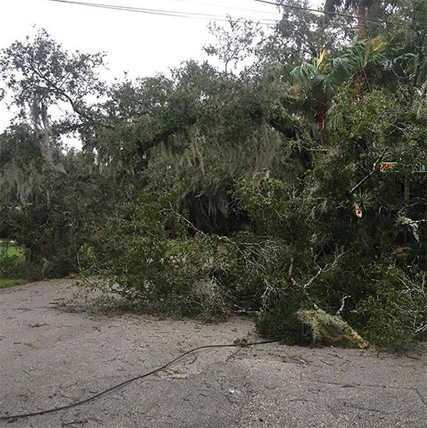 "<div class=""meta image-caption""><div class=""origin-logo origin-image none""><span>none</span></div><span class=""caption-text"">Bob Micket near Fort Pierce, Fla., shared this photo of downed trees and power lines. (bobmicket/Instagram)</span></div>"