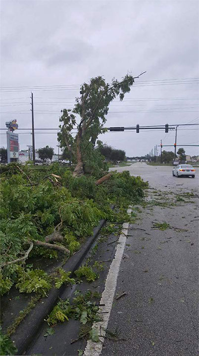 <div class='meta'><div class='origin-logo' data-origin='none'></div><span class='caption-text' data-credit='Martin County Sheriff's Office/Facebook'>The Martin County Sheriff's Office in Florida said they are working to remove the downed trees.</span></div>
