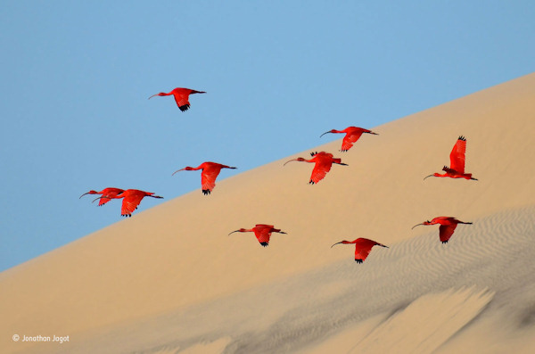 "<div class=""meta image-caption""><div class=""origin-logo origin-image none""><span>none</span></div><span class=""caption-text"">Jonathan Jagot, 15, of France, won the 15-17 age category with this photo, ""Flight of the scarlet ibis."" (Jonathan Jagot)</span></div>"