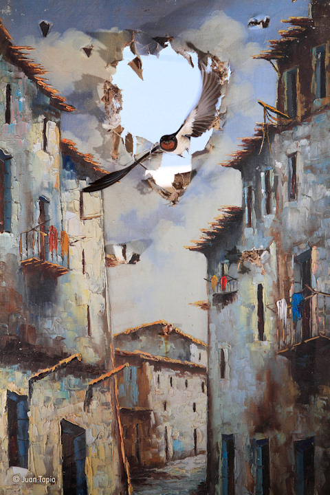 "<div class=""meta image-caption""><div class=""origin-logo origin-image none""><span>none</span></div><span class=""caption-text"">Juan Tapia of Spain won the Impressions category with his photo ''Life comes to art'' of barn swallows. (Juan Tapia)</span></div>"