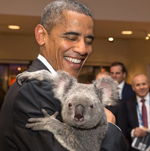 <div class='meta'><div class='origin-logo' data-origin='none'></div><span class='caption-text' data-credit='Pete Souza, Chief Official White House Photographer'>A koala looks directly at Souza's lens at the G20 Summit in Brisbane, Australia in 2014.</span></div>