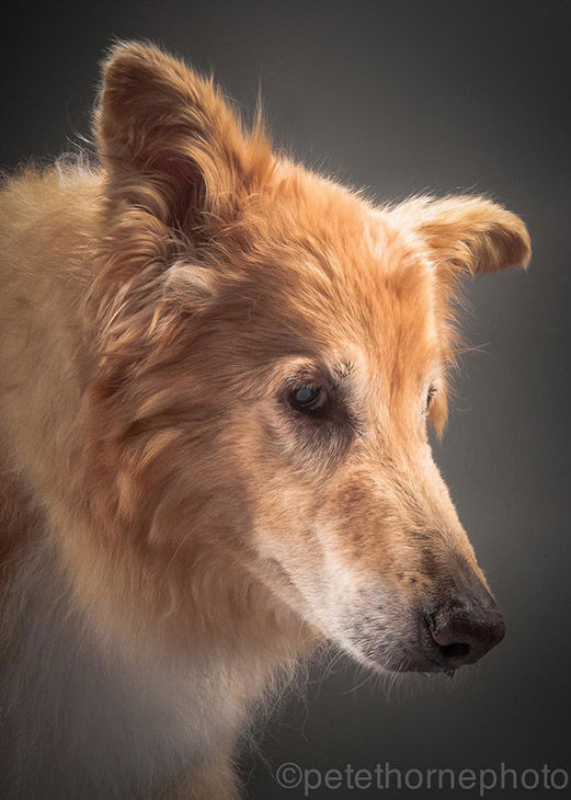 "<div class=""meta image-caption""><div class=""origin-logo origin-image ""><span></span></div><span class=""caption-text"">This photo of Clovis was taken shortly after his 14th birthday. He passed away not too long after the portrait was taken. (Pete Thorne)</span></div>"
