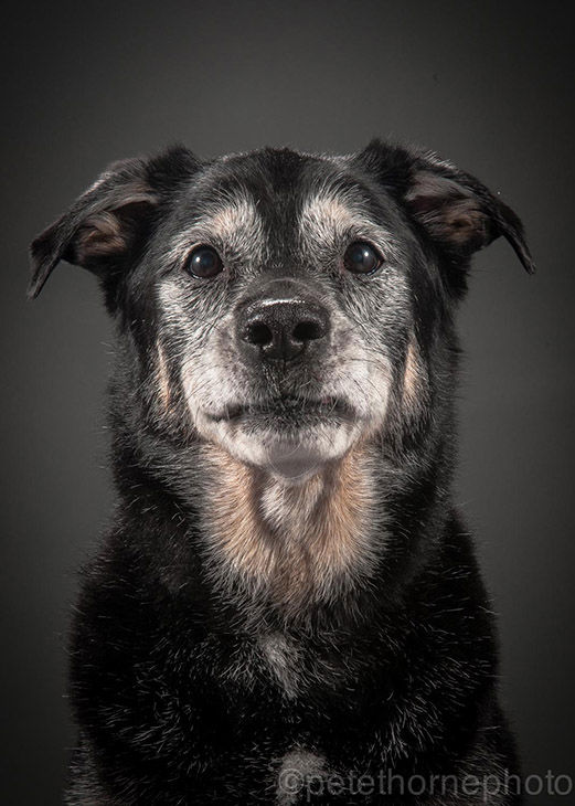 "<div class=""meta image-caption""><div class=""origin-logo origin-image ""><span></span></div><span class=""caption-text"">Jackson, a 14-year-old black Lab mix. (Pete Thorne)</span></div>"