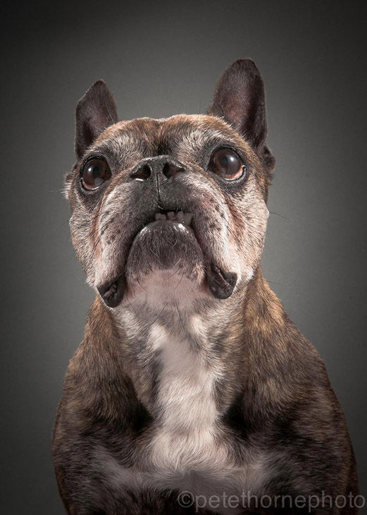 "<div class=""meta image-caption""><div class=""origin-logo origin-image ""><span></span></div><span class=""caption-text"">In his portrait series ""Old Faithful,"" Canadian photographer Pete Thorne shows that senior dogs are just as adorable as puppies. (Pete Thorne)</span></div>"