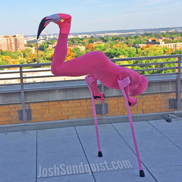 <div class='meta'><div class='origin-logo' data-origin='none'></div><span class='caption-text' data-credit='Josh Sundquist'>In 2013, Josh Sundquist dressed as a flamingo.</span></div>