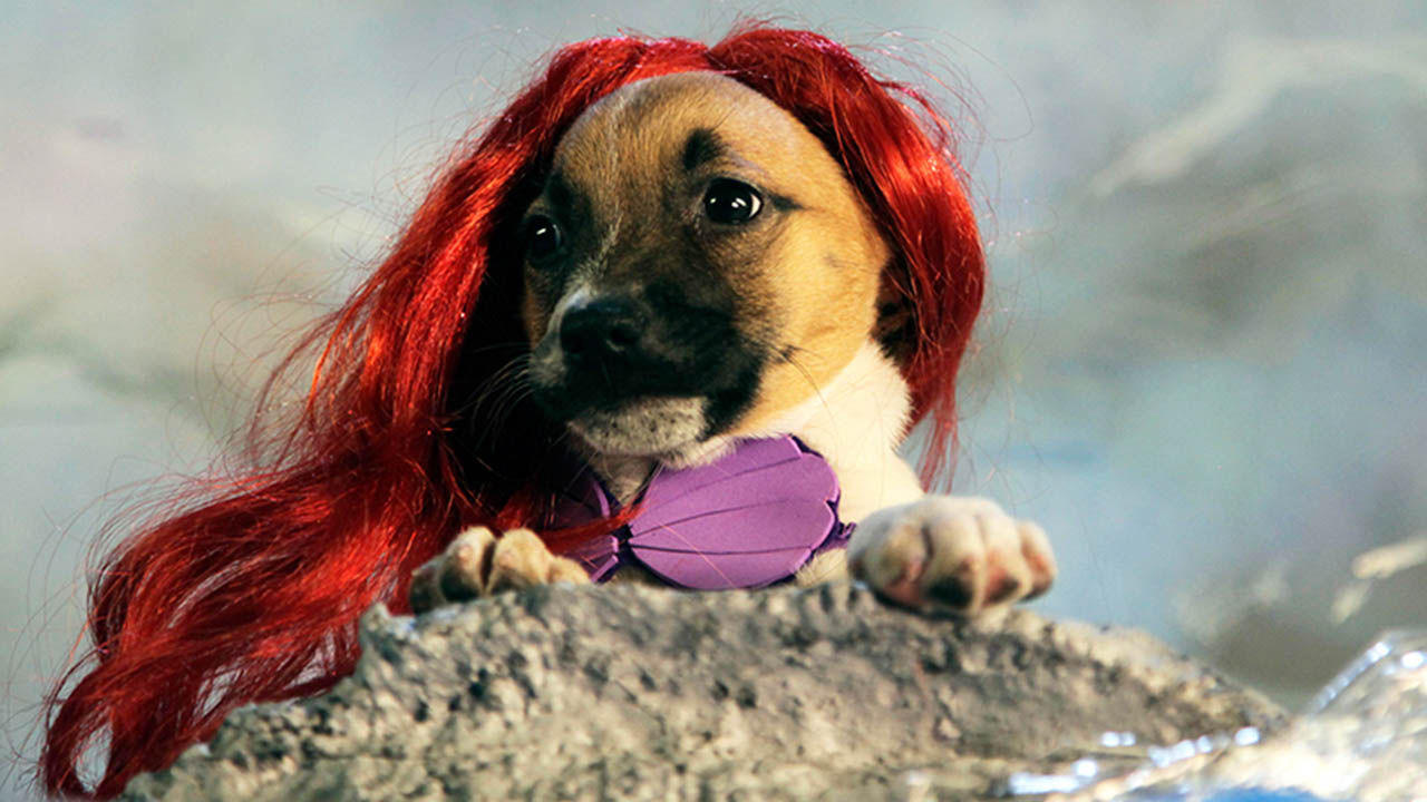 Disney Movies With Dogs In Them