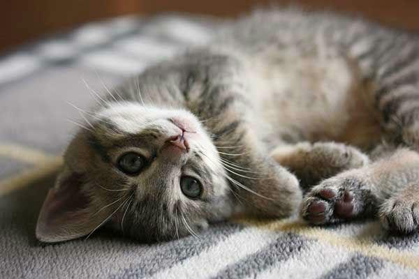 ten most popular kitty names in 2014 6abccom