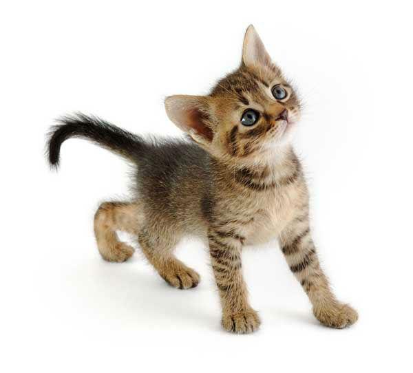 Popular Male Cat Names 45