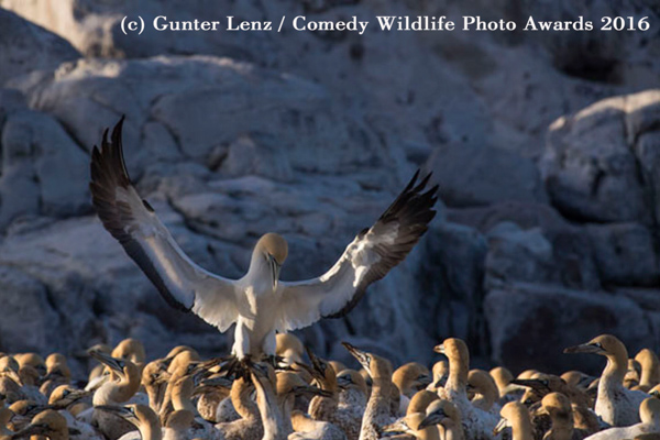 "<div class=""meta image-caption""><div class=""origin-logo origin-image none""><span>none</span></div><span class=""caption-text"">(Gunter Lenz/Comedy Wildlife Photo Awards 2016)</span></div>"