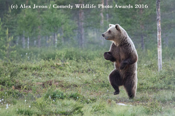 "<div class=""meta image-caption""><div class=""origin-logo origin-image none""><span>none</span></div><span class=""caption-text"">(Alex Jevon/Comedy Wildlife Photo Awards 2016)</span></div>"