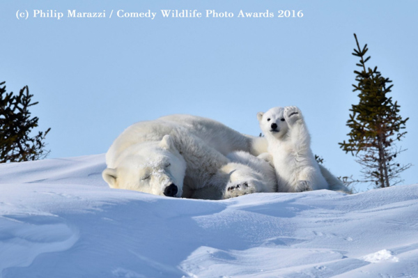 "<div class=""meta image-caption""><div class=""origin-logo origin-image none""><span>none</span></div><span class=""caption-text"">(Philip Marazzi/Comedy Wildlife Photo Awards 2016)</span></div>"