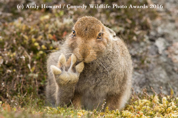 "<div class=""meta image-caption""><div class=""origin-logo origin-image none""><span>none</span></div><span class=""caption-text"">(Andy Howard/Comedy Wildlife Photo Awards 2016)</span></div>"