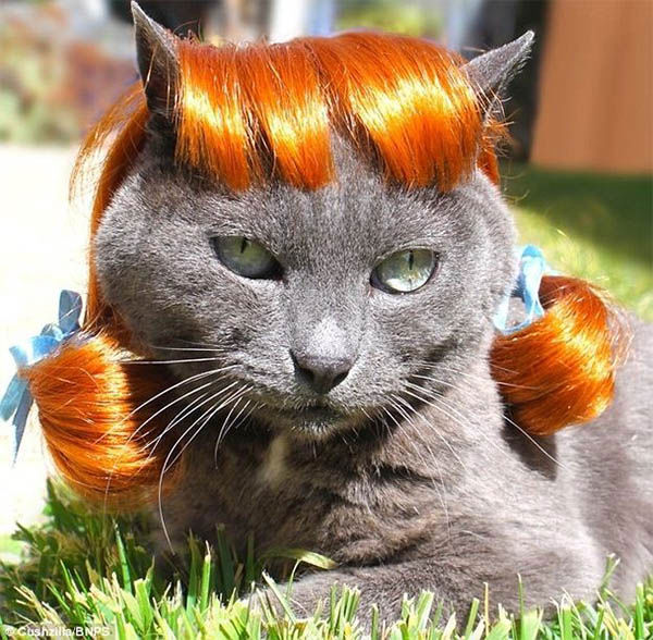 What lovely locks you have. <span class=meta>Photo/cat</span>