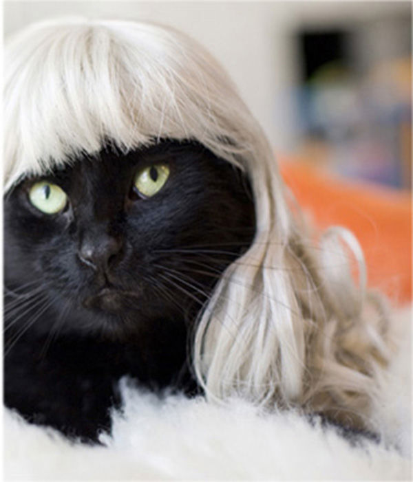 Blondes always have more fun. <span class=meta>Photo/KittyWigs.com</span>
