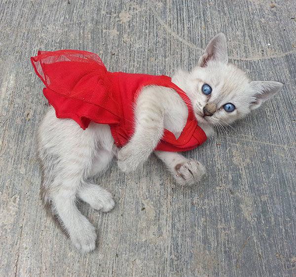 Feline Fatale. <span class=meta>redvelvet27 / Reddit.</span>