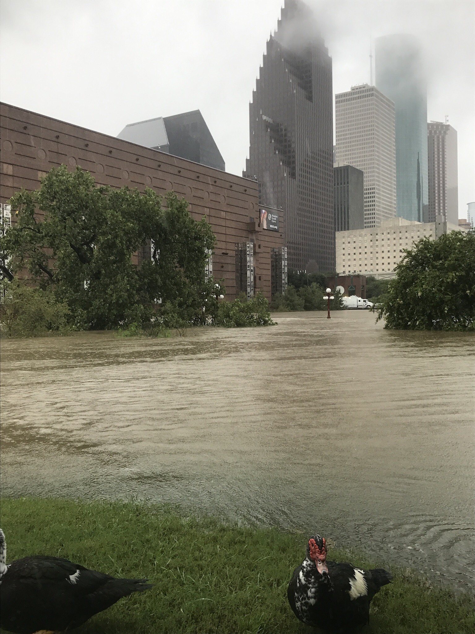 <div class='meta'><div class='origin-logo' data-origin='KTRK'></div><span class='caption-text' data-credit=''>Flooding outside the Wortham Center in downtown Houston.</span></div>