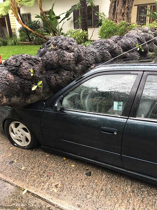 "<div class=""meta image-caption""><div class=""origin-logo origin-image kabc""><span>KABC</span></div><span class=""caption-text"">ABC7 viewer Bill Jurney shared this photo of a toppled tree in the Miracle Mile District on Friday, Feb. 17, 2017. (ABC7 viewer Bill Jurney )</span></div>"
