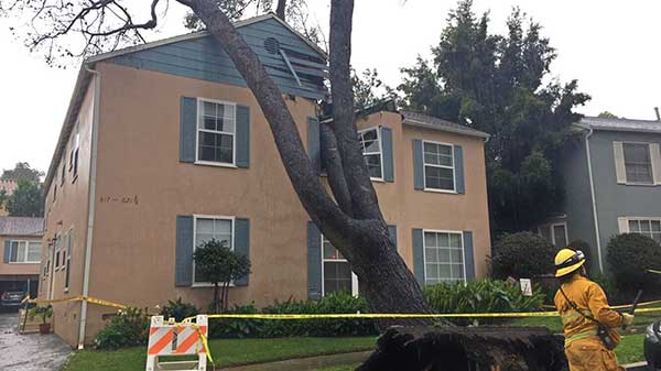 "<div class=""meta image-caption""><div class=""origin-logo origin-image kabc""><span>KABC</span></div><span class=""caption-text"">ABC7 viewer Alejandro Cabrera shared this photo of a toppled tree in Westwood on Friday, Feb. 17, 2017. (ABC7 viewer Alejandro Cabrera )</span></div>"