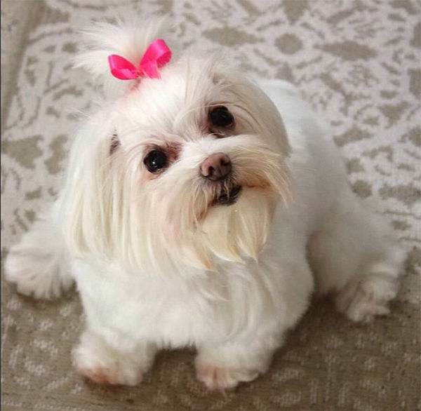 """<div class=""""meta image-caption""""><div class=""""origin-logo origin-image none""""><span>none</span></div><span class=""""caption-text"""">Meet Chloe! In honor of National Puppy Day, ABC7 viewers are sending us photos of their adorable dogs. Share your pics on Twitter, Instagram and Facebook with #ABC7Puppy. (KABC / Instagram.com/katushala)</span></div>"""