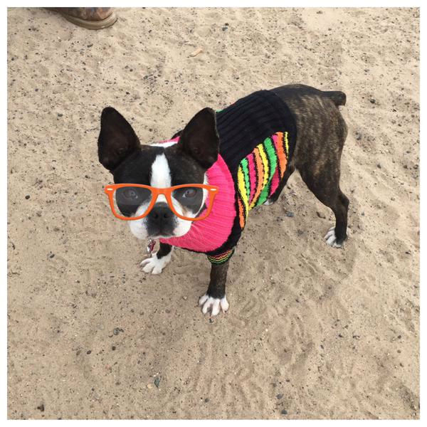 """<div class=""""meta image-caption""""><div class=""""origin-logo origin-image none""""><span>none</span></div><span class=""""caption-text"""">Meet Hannah! In honor of National Puppy Day, ABC7 viewers are sending us photos of their adorable dogs. Share your pics on Twitter, Instagram and Facebook with #ABC7Puppy. (KABC / Twitter.com/cferguson48)</span></div>"""