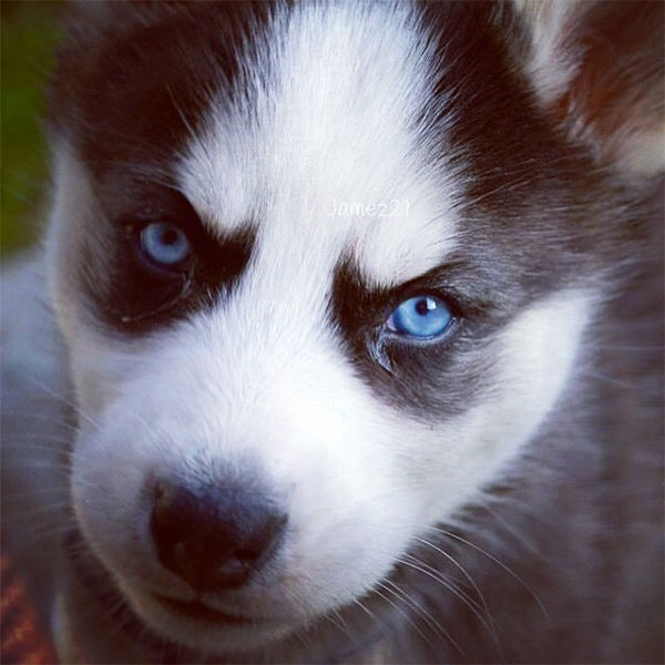 """<div class=""""meta image-caption""""><div class=""""origin-logo origin-image none""""><span>none</span></div><span class=""""caption-text"""">In honor of National Puppy Day, ABC7 viewers are sending us photos of their adorable dogs. Share your pics on Twitter, Instagram and Facebook with #ABC7Puppy. (KABC / Instagram.com/jamez21)</span></div>"""
