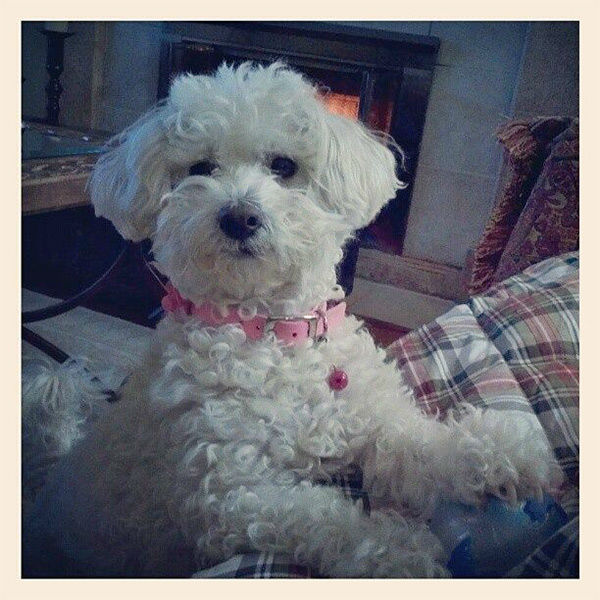 """<div class=""""meta image-caption""""><div class=""""origin-logo origin-image none""""><span>none</span></div><span class=""""caption-text"""">Meet Maisy! In honor of National Puppy Day, ABC7 viewers are sending us photos of their adorable dogs. Share your pics on Twitter, Instagram and Facebook with #ABC7Puppy. (KABC / Facebook.com/angela.taczli)</span></div>"""
