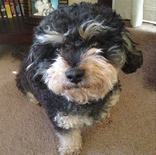 """<div class=""""meta image-caption""""><div class=""""origin-logo origin-image none""""><span>none</span></div><span class=""""caption-text"""">Meet Max! In honor of National Puppy Day, ABC7 viewers are sending us photos of their adorable dogs. Share your pics on Twitter, Instagram and Facebook with #ABC7Puppy. (KABC / Instagram.com/pix4nix)</span></div>"""