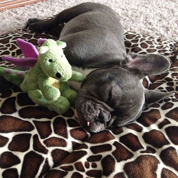 """<div class=""""meta image-caption""""><div class=""""origin-logo origin-image none""""><span>none</span></div><span class=""""caption-text"""">Meet Oliver! In honor of National Puppy Day, ABC7 viewers are sending us photos of their adorable dogs. Share your pics on Twitter, Instagram and Facebook with #ABC7Puppy. (KABC / Instagram.com/olleyjack)</span></div>"""